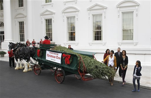 white house christmas tree 2010